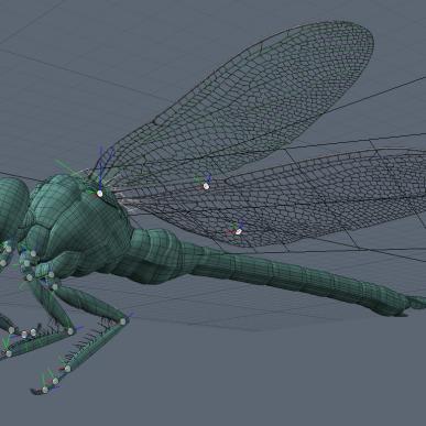 2010_nbyn_mo_dragonfly_model_01