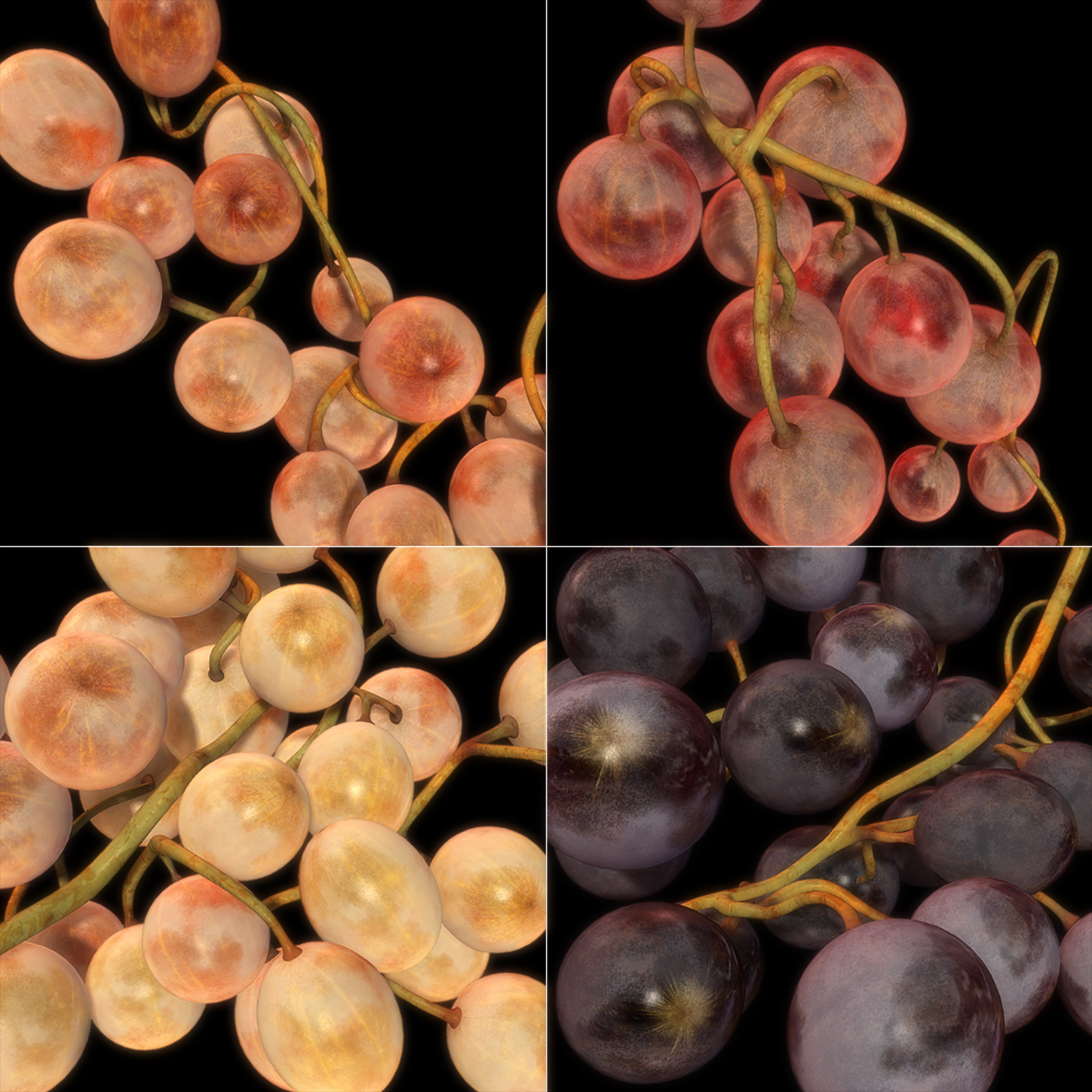 2003_fruta_mo9_grapes_4colours