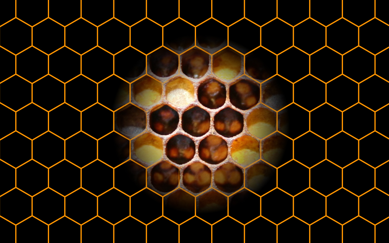 2019_ip_06_hexagon_to_panal_1