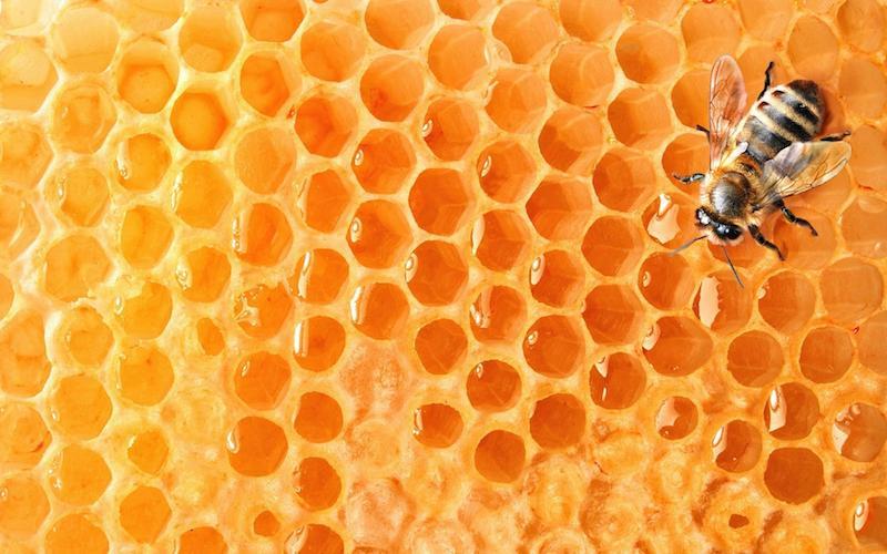 2019_ip_08_honeycomb_bees